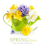 Spring flowers in green watering can — Stock Photo