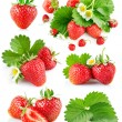 Set berry strawberry with leaves and flowers — Fotografia Stock  #62142929