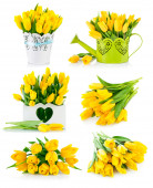 Set bunch yellow tulips — Stock Photo