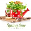 Spring flowers green leaves in watering can garden tools — Stock Photo #65602623