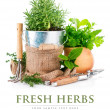 Fresh green herbs with garden tools — Stock Photo #66703777