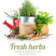 Fresh green herbs with garden tools — Stock Photo #69311043