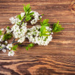 Branch blooming tree plum on wooden board — Stock Photo #72057239