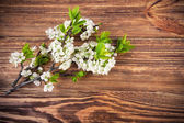 Branch blooming tree plum on wooden board — Stock Photo