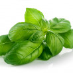 Fresh green leaf basil — Stock Photo #72261647