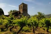 教会およびブドウ園 — ストック写真