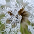Dandelion and dew drops — Stock Photo #57511601