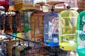 Vogel markt — Stockfoto