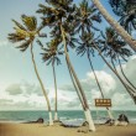 Palms on the Beach — Stock Photo #61623567