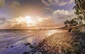 Palms on the beach — Stock Photo