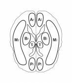 Human brain vector illustration isolated on white — Stock Vector