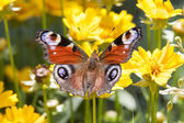 The butterfly sitting on a flower among the leaves — Stock Photo