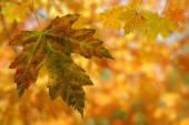 Autumn background — Stockfoto