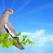 Dove perched on branch  — Stock Photo #58023343
