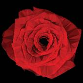Low-poly Red Rose — Stock Photo