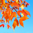 Autumn Leaves over Blue Sky Background — Stock Photo #80175932