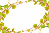 The green creeper plant  frame isolated on white background — Stock fotografie