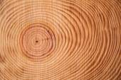 The rings of the pine tree — Stock Photo
