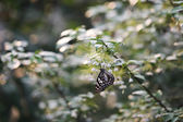 Butterfly fly in morning nature — Stock Photo