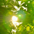 Beautiful green leaves and bright sun — Stock Photo #52890441