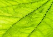 Green leaf — Stockfoto