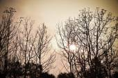 Dead tree in the sunset — Stock Photo