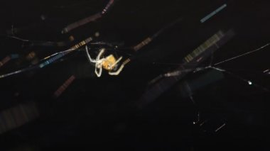 Creepy Spider. — Stock Video