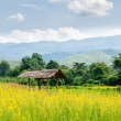 Traditional huts of Thailand. — Stock Photo #75540159