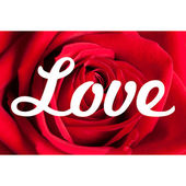 Love Roses Background — Stock Photo