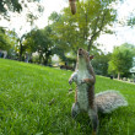 Feeding a wild squirrel — Stock Photo #72076515