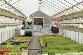 Nursery Greenhouse Interior — Stock Photo