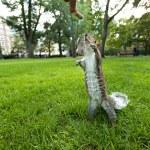 Feeding Wild Squirrel a Peanut — Stock Photo #75236925