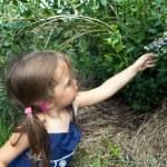 Little Girl Picking Blueberries — Stock Photo #75236725