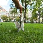 Feeding Wild Squirrel a Peanut — Stock Photo #77592736