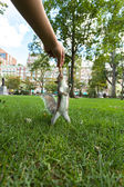 Feeding Wild Squirrel a Peanut — Stockfoto