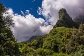 Beautiful Hawaiian Rainforest — Stock Photo
