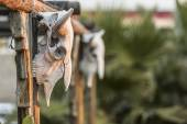 Two Cow Skulls on Porch — Stock Photo