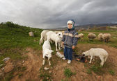 Shepherd Boy in Rural Anatolia — Stock Photo