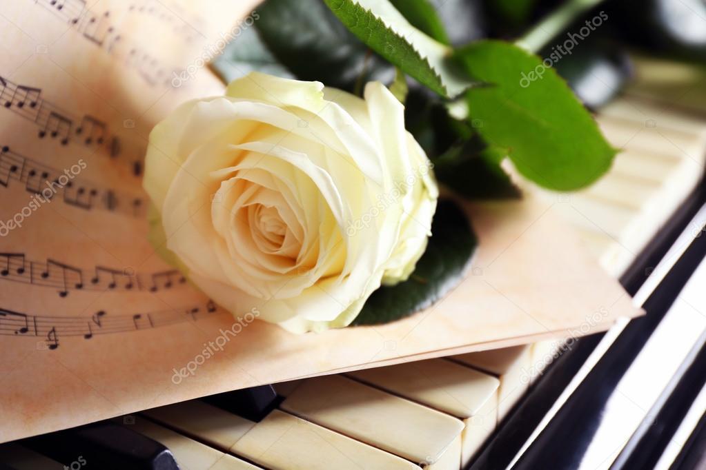 белая роза знакомство красная роза любовь слушать