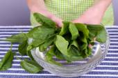 Woman holding tuft of sorrel in glass basin — Stock Photo