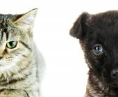 Cute cat and dog faces isolated on white — Stock Photo