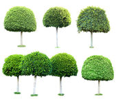 Collage of green trees isolated on white — Foto Stock
