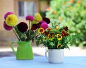 Dahlia flowers in vase on table, outdoors — Stock Photo