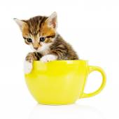 Cute little kitten in cup isolated on white — Stok fotoğraf