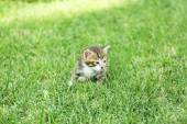 Cute little kitten on grass outdoors — Stok fotoğraf