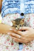 Cute little kitten in hands outdoors — Stok fotoğraf