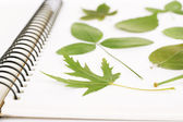 Dry up plants on notebook close up — Stock Photo
