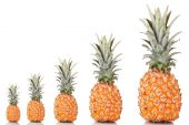 Evolution concept.Ripe pineapples isolated on white — Stock Photo
