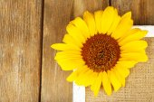 Beautiful sunflower on frame on wooden background — Stock Photo