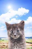 Small grey kitten outdoors — Stock Photo